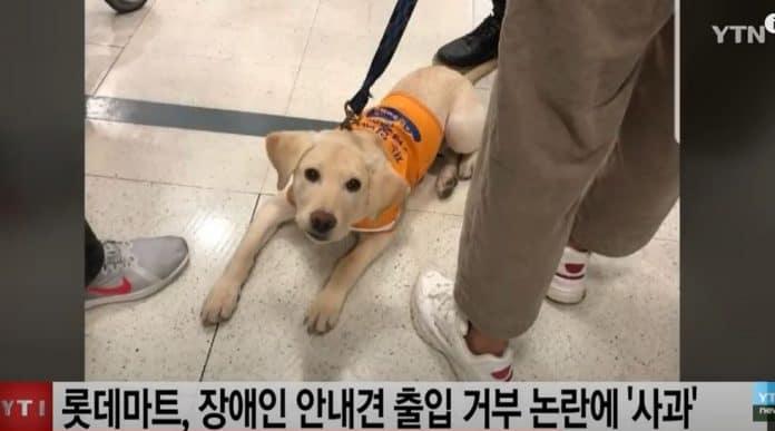 롯데마트 안내견 출입 금지 관련 뉴스 장면
